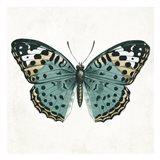 Neutral Butterfly 2