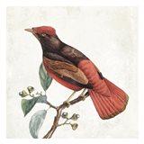 Lovely Birds 3