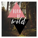 Born to be Wild 2