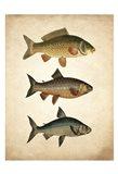 Fish B