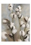 Sprays of Cotton 1