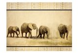 Tribal Elephants