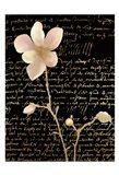Magnolia Gold 1