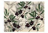 Olive Branch 1