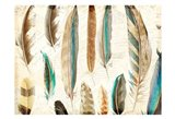 Feather Letters 1