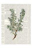 Fresh Herbs 1