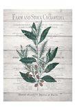Botanical A v2