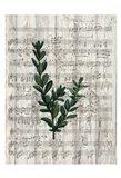 Musical Botanical 1