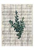 Musical Botanical 3