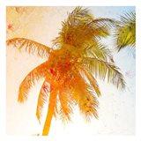 Bright Palm 1