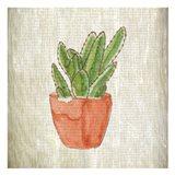 Spring Cactus 1