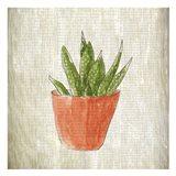 Spring Cactus 3