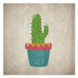 Wild Cactus 1