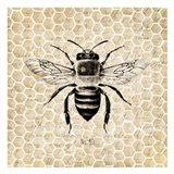 Honeycomb No 40