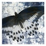 Butterfly Blues 1
