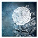 White Bloom 2