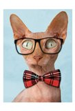 Sophisticated Sphynx
