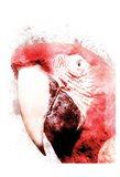 Marvelous Macaw 3