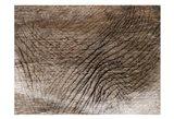 Mastadon Tapestry 1