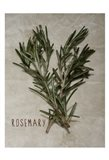 Time-Honored Rosemary 2