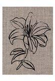 Linen Beauty 2