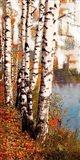 Summer Birch 1