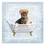 Fun Kitty Bath 2