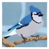 Majestic Blue Jay