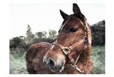 Horse Pose