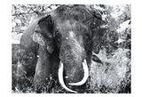 Elephant Look Two