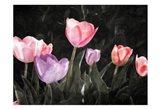 Tulips In The Dark