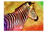 Bright Zebra
