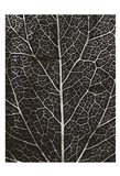 Charcoal Leaf Grain