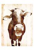 Aaahh Cow