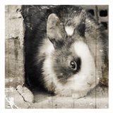 Bunny See Again
