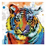 Tiger Rainbow