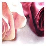Rose Mates