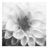 Past Flower