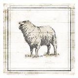 Modern Sheep