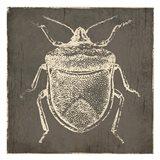 Bug Life Two