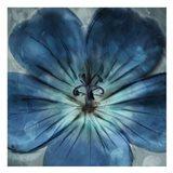 Uplifting Blue Flower