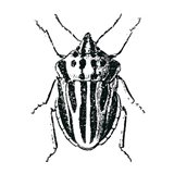 Bug Life Three