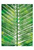 Watercolor Palms Mate