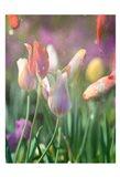 Tulip Swim B