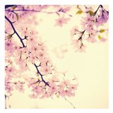 Spring Springs