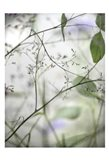 Soft Leaves I