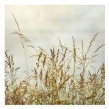 Bluff Grass 1