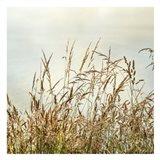 Bluff Grass 2
