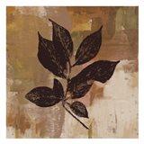 Brown Leaves 2