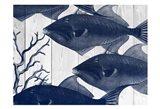 Blue Fishe